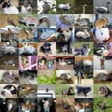 Grupo de 48 fotos dos animais Fotografia de Stock Royalty Free