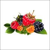 Grupo de framboesa, de amora-preta e de cloudberries ilustração stock
