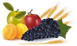 Grupo de fruta e de algumas orelhas do trigo. ilustração stock