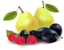 Grupo de fruta y de bayas. Fotografía de archivo libre de regalías