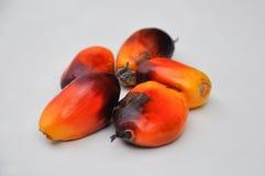 Grupo de frutas de la palma de petróleo Fotos de archivo libres de regalías