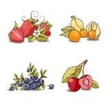 Grupo de fruto ilustração do vetor