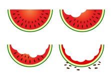 Grupo de fruto da melancia que come a fase ilustração do vetor