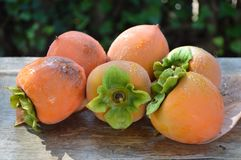 Grupo de fruto dos caquizeiros Fotografia de Stock Royalty Free