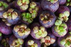 Grupo de fruto tropical famoso do mangustão Imagens de Stock Royalty Free