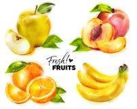 Grupo de frutos frescos da aquarela com Dots Paper Texture fino Foto de Stock