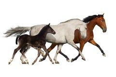 Grupo de funcionamiento del caballo Imagen de archivo