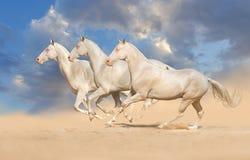 Grupo de funcionamiento del caballo Imagenes de archivo
