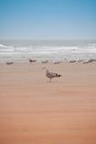 Grupo de gaivotas na praia Foto de Stock Royalty Free