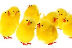 Grupo de galinha de Easter foto de stock royalty free