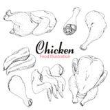 Grupo de galinha tirada mão isolada no fundo branco Imagem de Stock Royalty Free