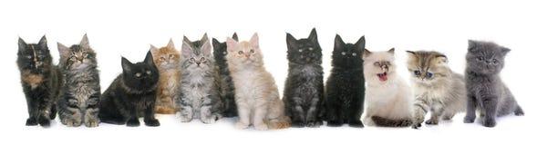 Grupo de gatito fotografía de archivo libre de regalías