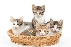 Grupo de gatitos jovenes en la cesta Fotos de archivo