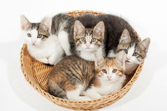 Grupo de gatitos jovenes en la cesta Imagenes de archivo