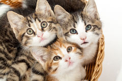 Grupo de gatitos jovenes en la cesta Imagen de archivo libre de regalías