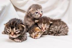 Grupo de gatitos recién nacidos Los pequeños gatitos lindos ciegos están esperando fotos de archivo libres de regalías