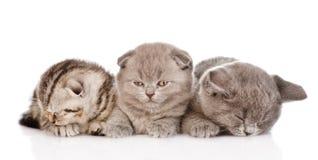 Grupo de gatitos soñolientos del bebé En el fondo blanco Imágenes de archivo libres de regalías