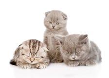 Grupo de gatitos soñolientos del bebé En el fondo blanco Fotografía de archivo
