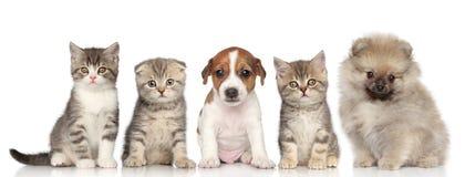 Grupo de gatitos y de perritos Imagen de archivo libre de regalías