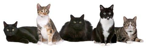 Grupo de gatos Foto de archivo libre de regalías