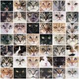 Grupo de gatos Imagem de Stock
