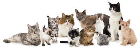 Grupo de gatos imagem de stock royalty free