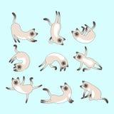 Grupo de gatos bonitos que praticam a ioga Fotos de Stock Royalty Free