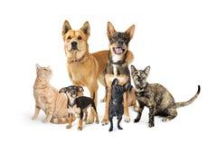 Grupo de gatos e de cães que olham acima no branco fotos de stock