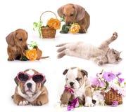 Grupo de gatos e de cães imagem de stock royalty free