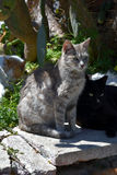 Grupo de gatos perdidos Imagen de archivo libre de regalías