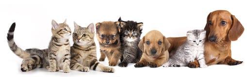 Grupo de gatos y de perros Foto de archivo