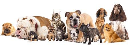 Grupo de gatos y de perros Fotos de archivo libres de regalías