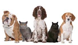 Grupo de gatos y de perros Imagen de archivo libre de regalías