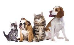 Grupo de gatos y de perros delante del fondo blanco Fotos de archivo libres de regalías