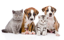 Grupo de gatos y de perros que se sientan en frente Aislado Fotos de archivo libres de regalías