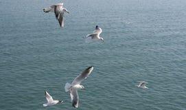 Grupo de gaviotas imagen de archivo libre de regalías