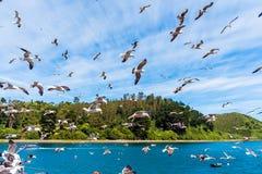 Grupo de gaviotas en el cielo, Puerto Montt, Chile Con el foco selectivo imagen de archivo libre de regalías