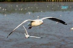 Grupo de gaviotas que vuelan sobre el mar de Bangpu Foto de archivo libre de regalías