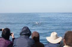 Grupo de gente de observación de la ballena que toma las fotos de una ballena Foto de archivo