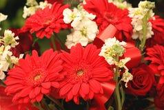 Grupo de gerberas e de rosas vermelhos Imagem de Stock