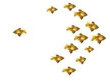 Grupo de goldfishes Imagem de Stock Royalty Free