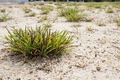 Grupo de hierba Foto de archivo libre de regalías