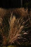 Grupo de hierba seca fotos de archivo