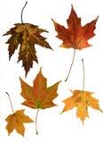 Grupo de hojas de la caída Foto de archivo