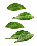 Grupo de hojas del verde en el blanco Imagen de archivo libre de regalías