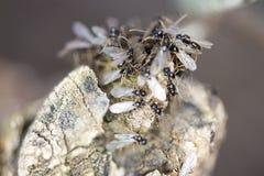 Grupo de hormigas del pavimento imagen de archivo libre de regalías