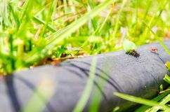 Grupo de hormigas que trabajan junto imágenes de archivo libres de regalías