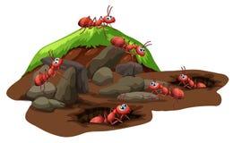 Grupo de hormigas que viven subterráneo stock de ilustración