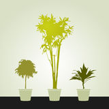 Grupo de houseplants Foto de Stock Royalty Free