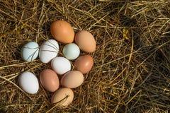 Grupo de huevos Imagen de archivo